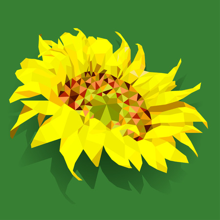 budding: Abstract polygonal geometric bright yellow colored sunflower  Isolated on green background Illustration
