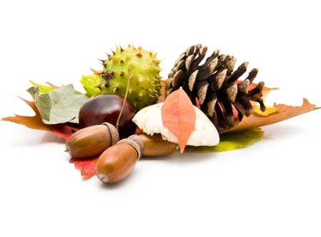 acorns, chestnuts and leaves on a white background  photo