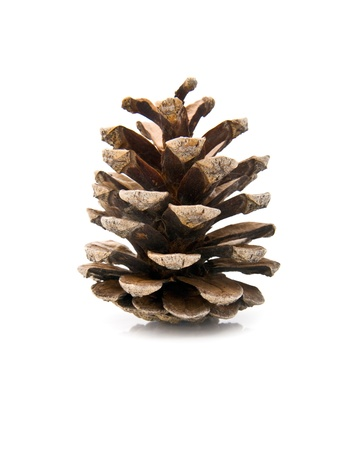 cone on a white background