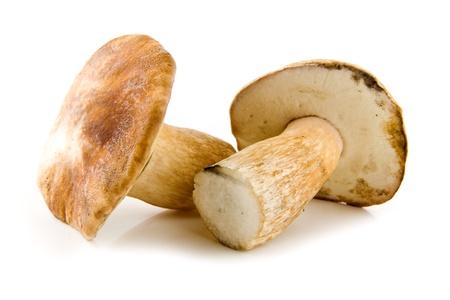 basidiomycete: mushroom on a white background  Stock Photo
