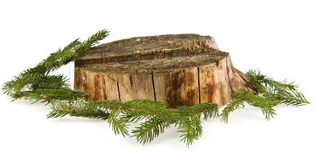 stump and branches of fir-tree on a white background