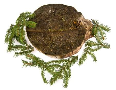 stump and branches of fir-tree on a white background photo