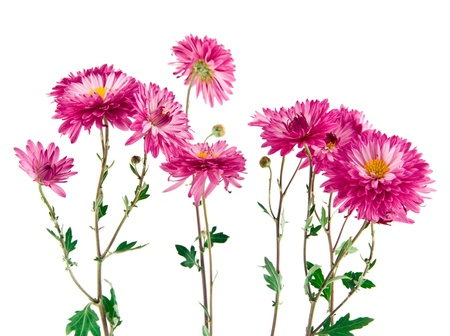 flowers on a white background Stock Photo - 15632714