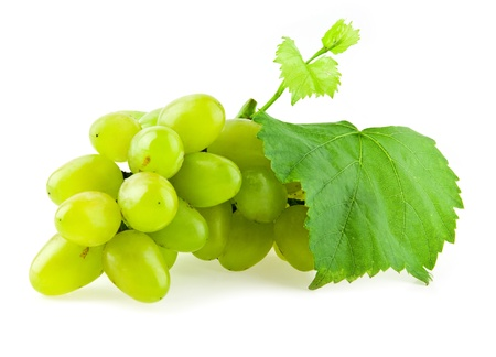 vine on a white background