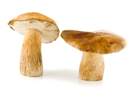 mushrooms on a white background