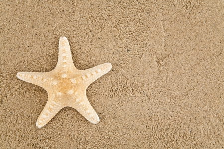 starfish on sand photo