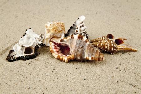 cockleshells: cockleshells on sand Stock Photo