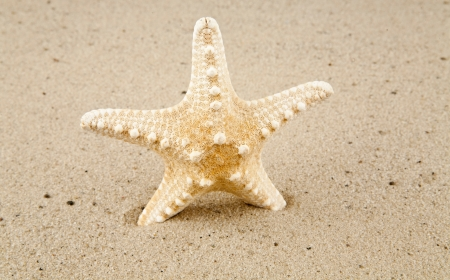 a star is marine on sand photo