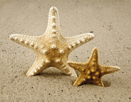 starfishes on sand photo