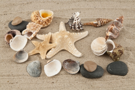starfish and cockleshells on sand photo