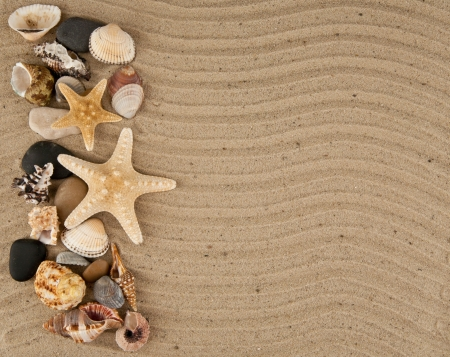cockleshells and stone on sand photo