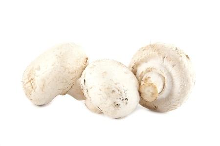 mushrooms on a white background Stock Photo - 17254444
