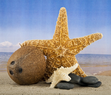 coconut and starfish on a background a sea photo