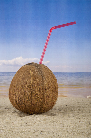 coconut on a background a sea photo