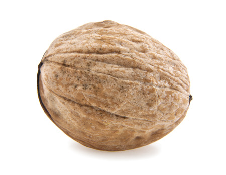 nut on a white background photo