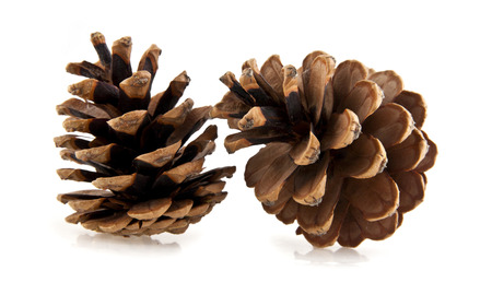 cones on a white background photo