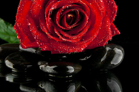 spa flower: rose drops of water with stones on a black background