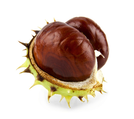 chestnuts on a white background Archivio Fotografico