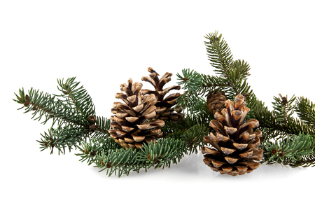 pine tree needles: branch of fir-tree and cone on a white background