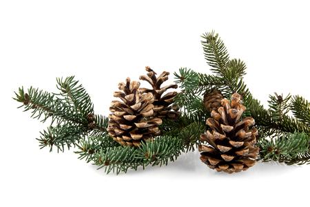 evergreen branch: rama de abeto y el cono sobre un fondo blanco