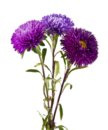 flowers are isolated on a white background Stock Photo