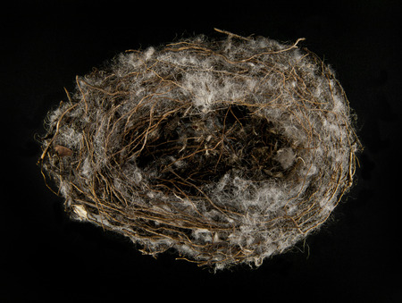 reproduce: bird nest on black background