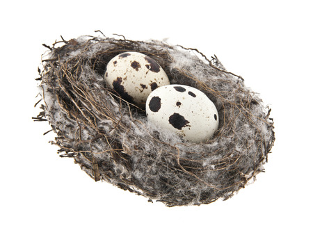 quail eggs in nest isolated on white background Stock Photo