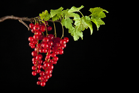 berries of urasnoy currant on a black background