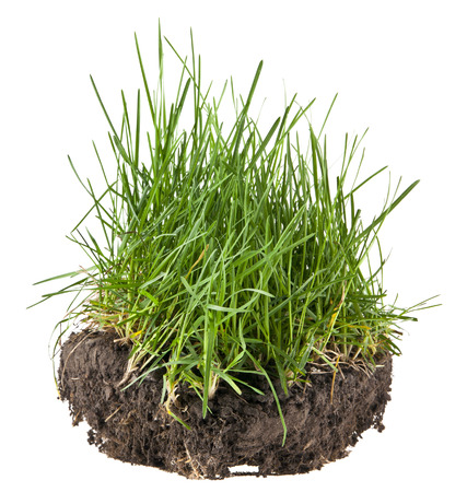 soil and grass isolated on a black background