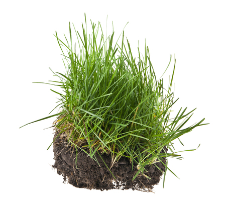 grass, soil and grass isolated on white background