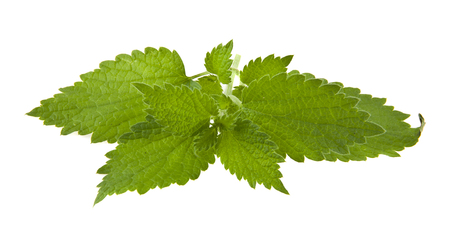 green nettle leaves isolated on white background