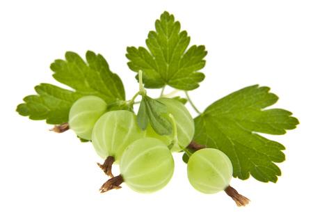 gooseberries isolated on white background 版權商用圖片 - 112081641