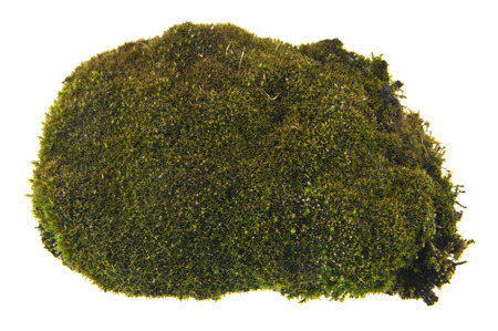 green moss isolated on white background. As an element of packaging design