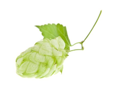 green hop isolated on white background. As an element of packaging design. Archivio Fotografico