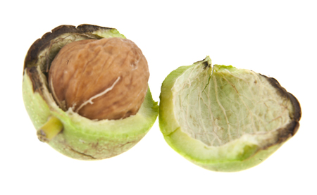 green walnuts isolated on white background Imagens