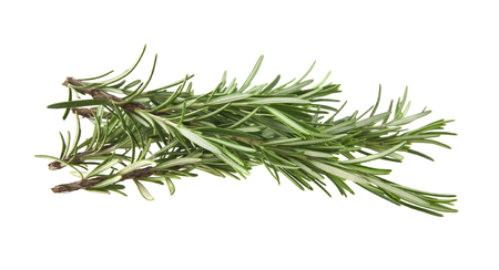 green sprig of rosemary isolated on white background Banco de Imagens