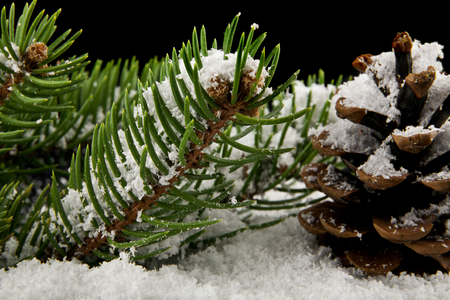 cones and branch of Christmas tree in snow on a black background close-up Banco de Imagens