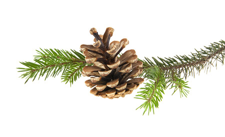 branch of Christmas tree with cones isolated on white background close-up Standard-Bild