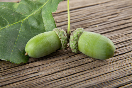 acorns on a wooden background closeup