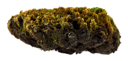 moss isolated on white background 写真素材