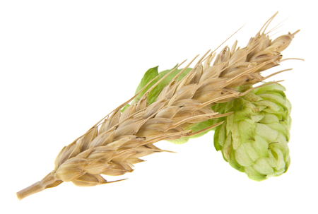 hops and spikelet isolated on white background 写真素材 - 122277496