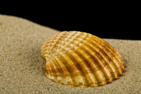 Seashell on the sand isolated on a black background close up. 免版税图像
