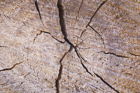 Wooden texture of a cut of a tree, stump as a background close-up.Concept as background for your illustrations.