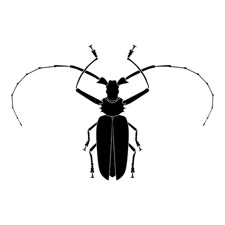 Insect silhouette.