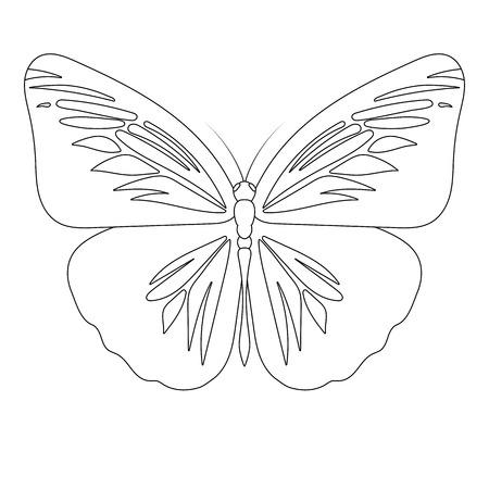 Butterfly line art vector illustration Illustration