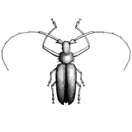 Vector bug hand-drawn in the style of vintage etchings