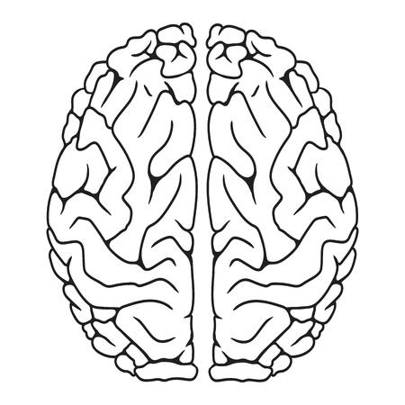 Human brain vector illustration design