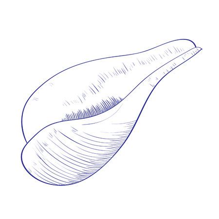 Seashell isolated on white background. Hand drawn vector illustrations Ilustração