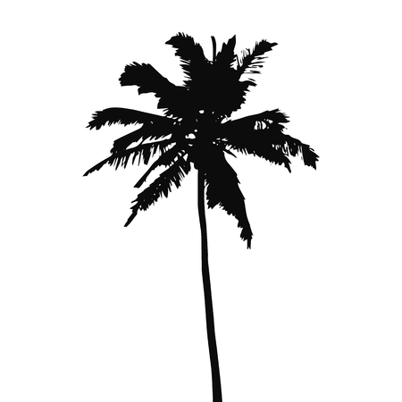Coconut palm tree black silhouette isolated on a white background. Vector illustration