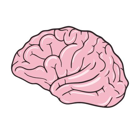 Menschliches Gehirn auf weißem Hintergrund. Vektor-Illustration